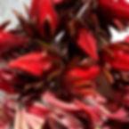 Ishigaki roselle flowers