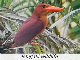 bird vacances a la mer ishigaki.jpg