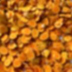 Autumn turmeric Ishigaki