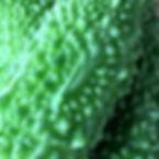 Bitter melon Ishigaki
