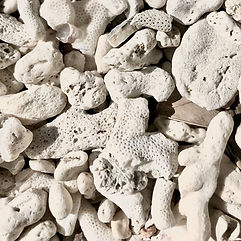 Pieces of coral (barasu)