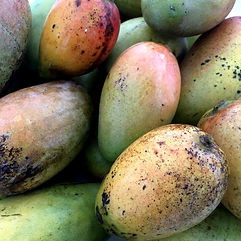 Natural mangoes Ishigaki