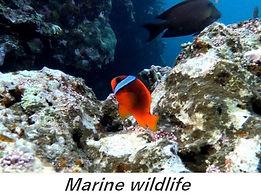 Ishigaki marine life vacances a la mer I
