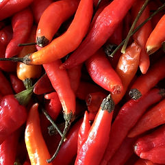 Ishigaki island chili pepper