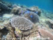 Vacances a la mer Ishigaki snorkeling to