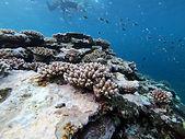 Vacances a la mer Ishigaki Snorkeling