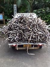 Sugar cane Ishigaki