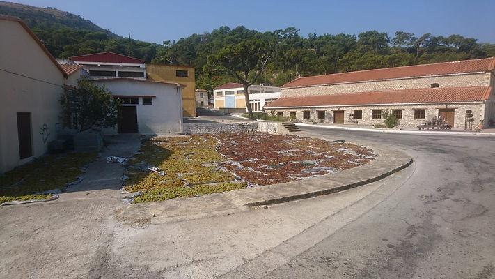 Samos Selfmaid Skills Factory local wine cooperative