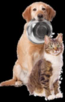 HomePage_DogCat.png