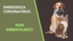 Banner Coranavirus Animals.jpg