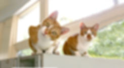 Due gatti.jpg