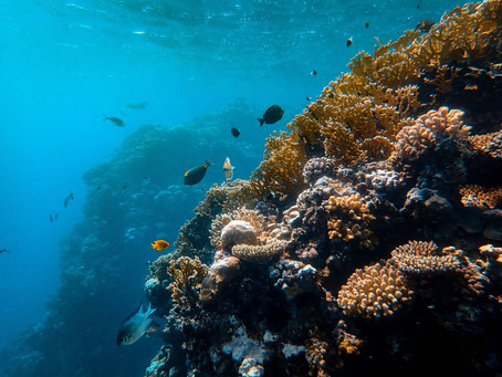 Do Not Bring and Use Sunscreen Harmful to Corals into the National Park