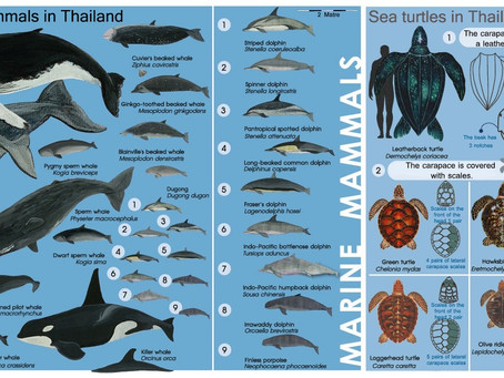 Rare sea creatures press releases from the Department of Marine and Coastal Resources