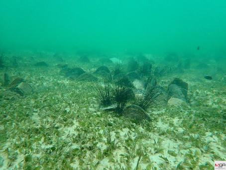 "Chumphon Island National Park found ""Seagrass"" denser than 80%"