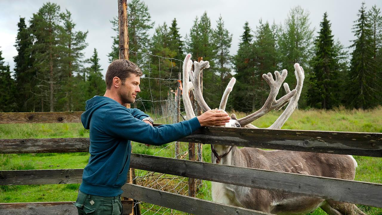 Petting a reindeer at a farm in Kuusamo, Finland