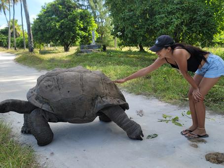 Traveling in Seychelles 2021