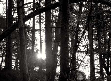 Ode matinale en forêt de Fontainebleau