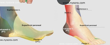 The Diabetic Foot Assessment