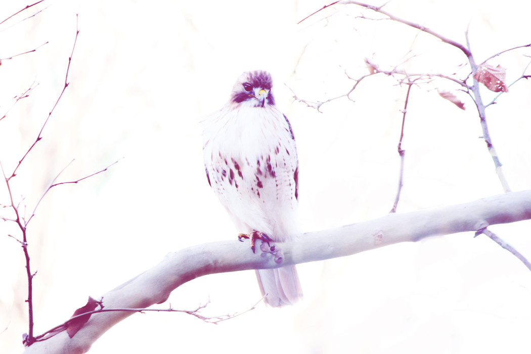 birdphotography