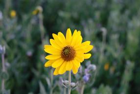 flowerphotography