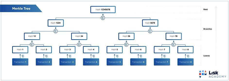 11b-merke-tree.jpg