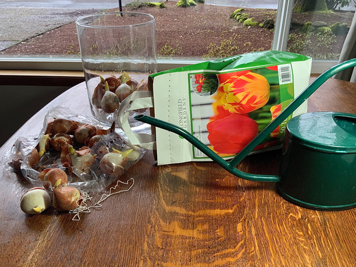 OPTIMISM GENERATED BY TULIP BULBS