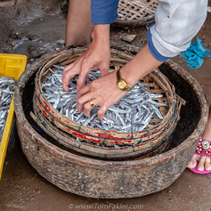 Sorting the day's catch