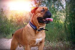 collier chien biothane