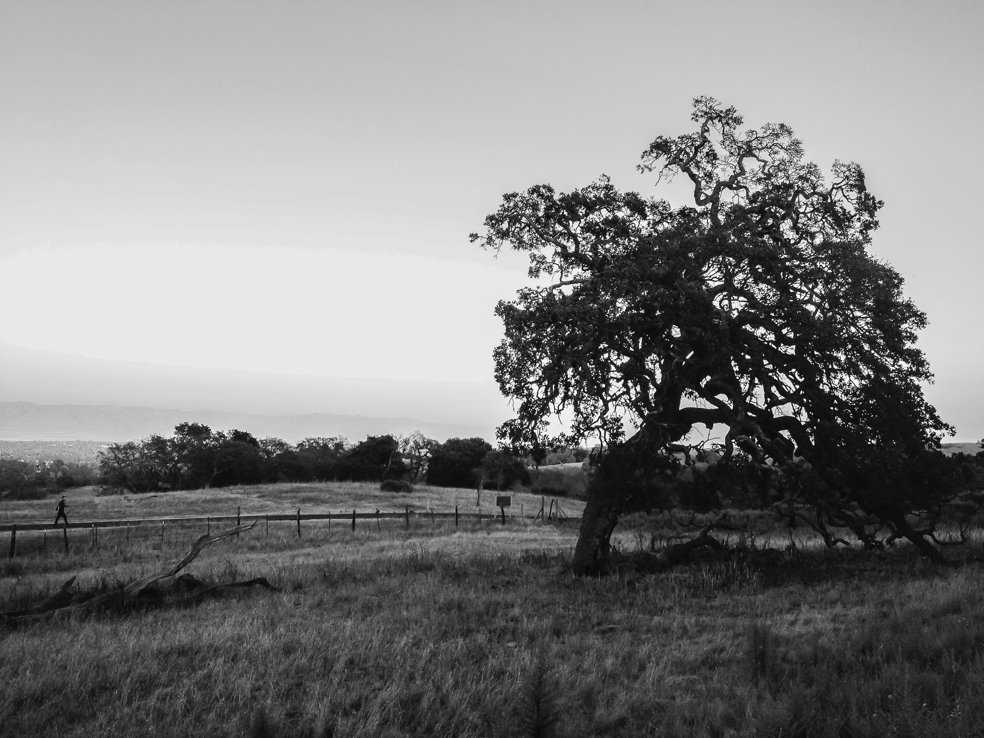 Lone Dish Tree