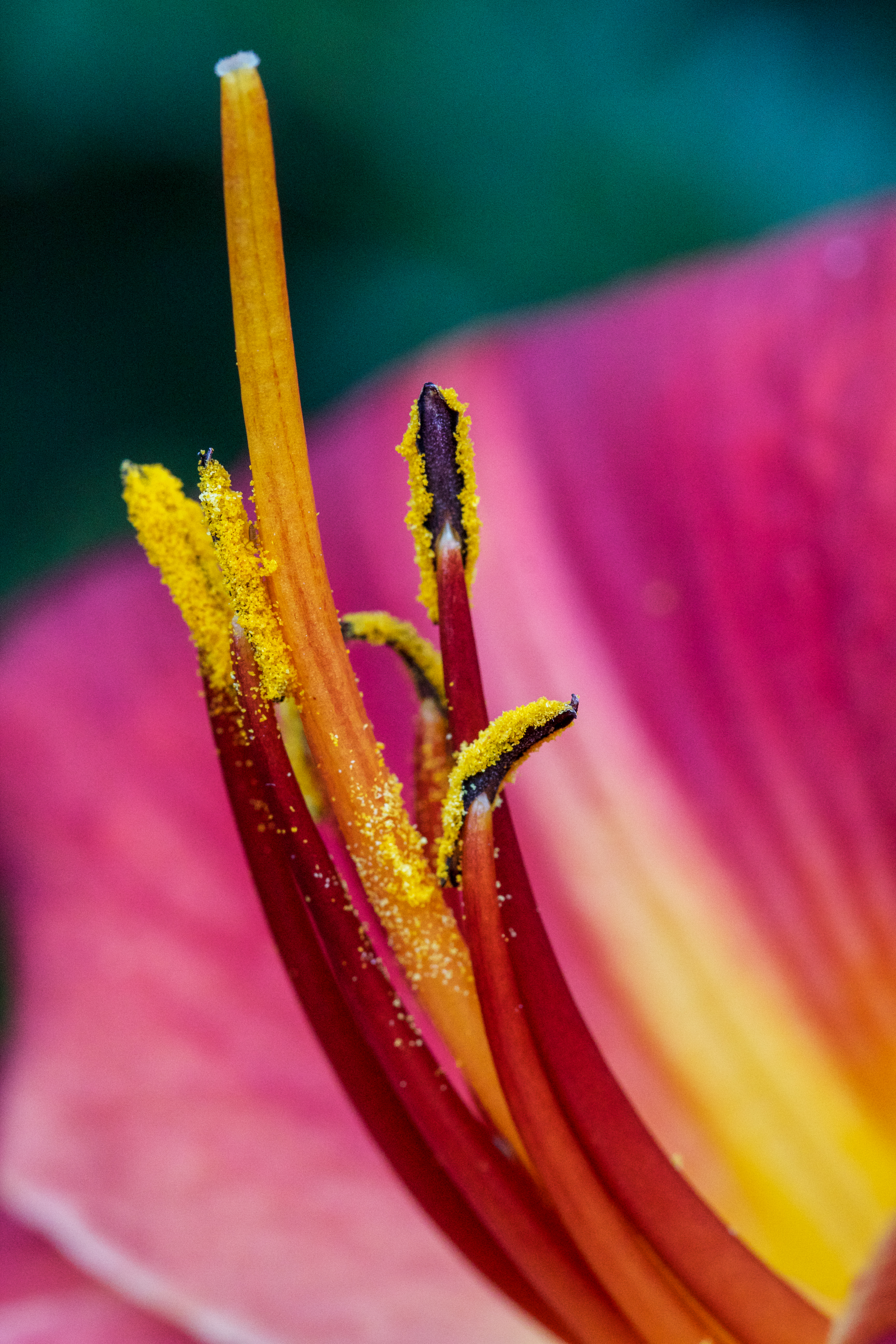 pollen on lily