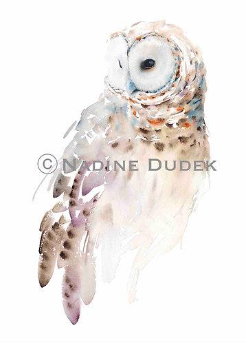 'Barred Owl' Limited Ed Giclee Print 18/40, unframed A2 (42 cm x 59 cm)