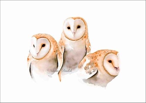 'A Trio of Owls' Limited Ed Giclee Print 2/60, unframed A2 (59 cm x 42 cm)