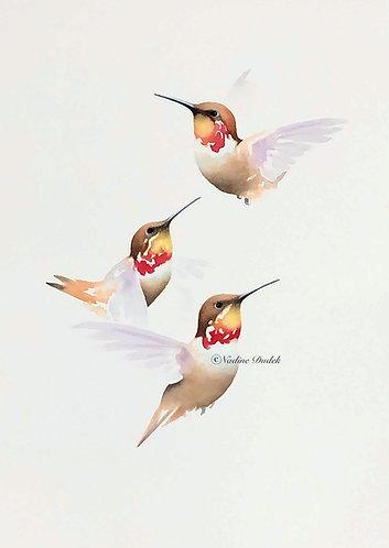Rufous Hummingbirds - Original Unframed Watercolour
