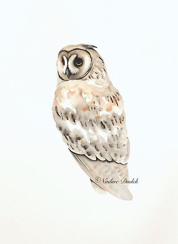 'Long Eared Owl' - Original Unframed Watercolour, paper size 76x56cm