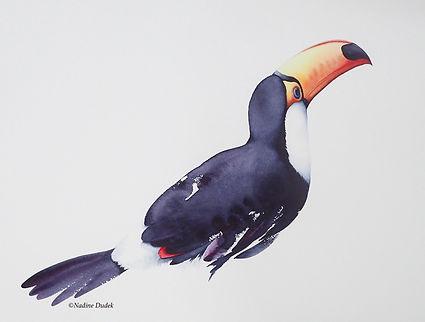 Toucan 'Rio' watecolour