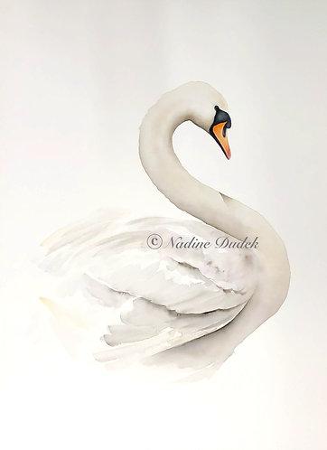White Swan - unframed original watercolour
