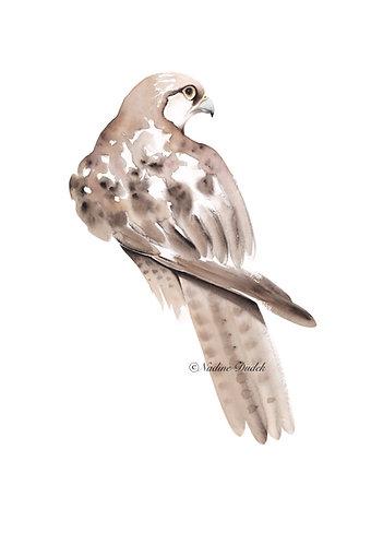 'Brown Falcon ' Ltd Ed Giclee Print 4/60, unframed A2 (42