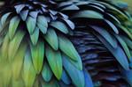 texture_feathers2.jpg