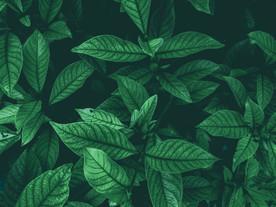 texture_leaves4.jpg