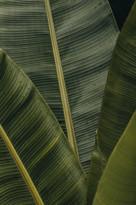 texture_leaves3.jpg