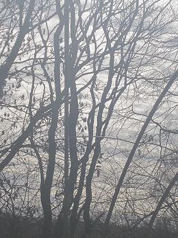 arbre - Omé M_