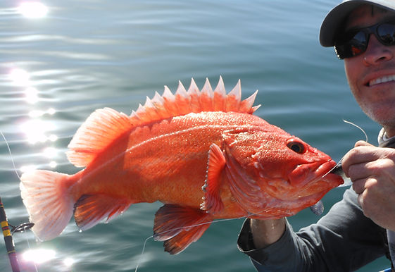 Amazing sportfishing catch