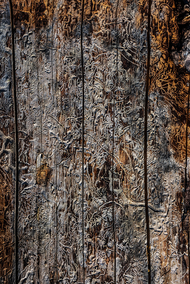 The Hieroglyphs of Destruction
