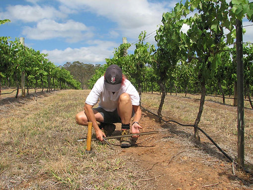 Jenny Bright - Vineyard Consultant, Hunter Valley & Bright Farm Proprietor