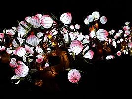 fleurs de lotus Festival des Lanterne Gaillac