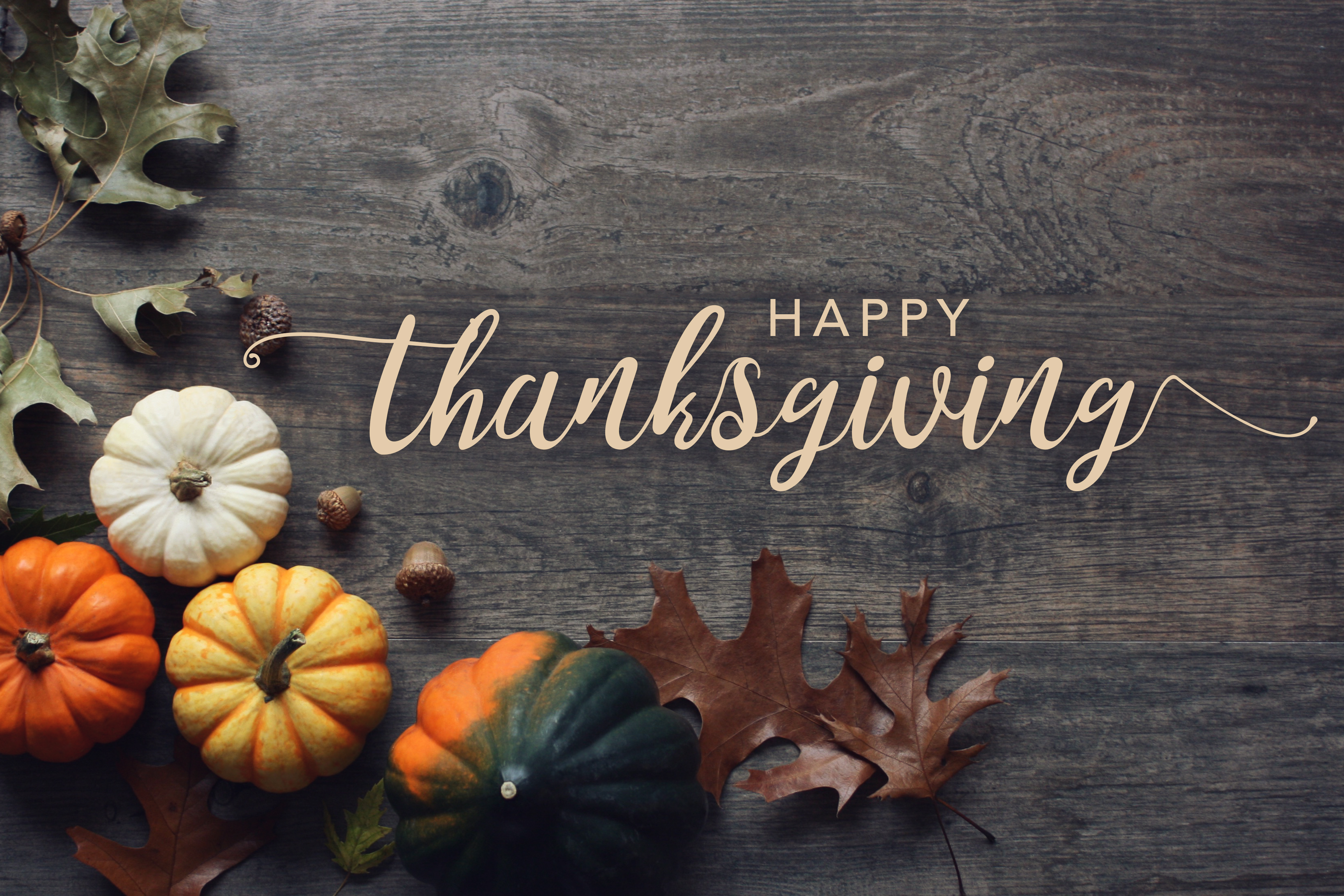 Happy Thanksgiving greeting text with co