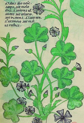 Voynich Manuscript Decoded