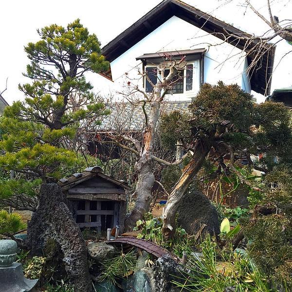 Farming, farmers house, Shiki Shi, Saitama, Japan, bonsai tree