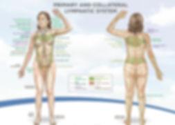 Λεμφικό Σύστημα | Φυσικοθεραπεία | P.H.C. Κέντρο Φυσικοθεραπείας