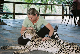 Breast Fed Cheetahs